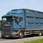 Level 2 Certificate in Transporting Animals by Road (Long Journeys)